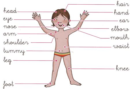 imagenes en ingles de las partes del cuerpo partes del cuerpo en ingles para imprimir