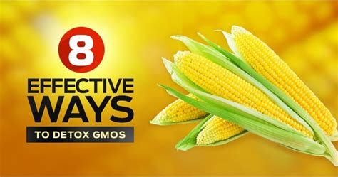 How Does It Take To Detox From Gmos 8 effective ways to detox gmos endoriot