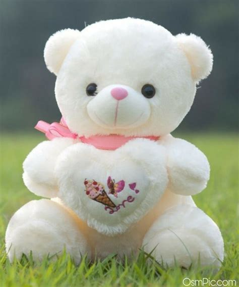 top  cute teddy bear images  love  whatsapp dp