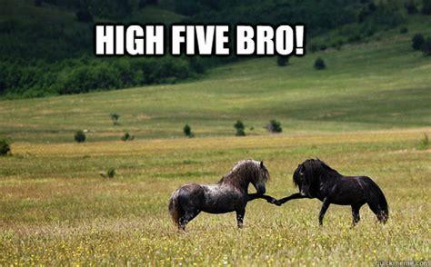 High Five Meme - high five bro horse five quickmeme