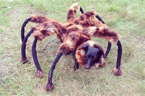 puppy spider spider 32 purr fectly costumes for pets to look spooky with