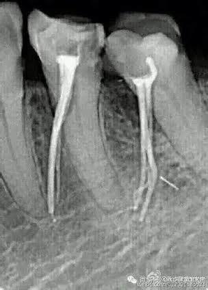 dentists      greg