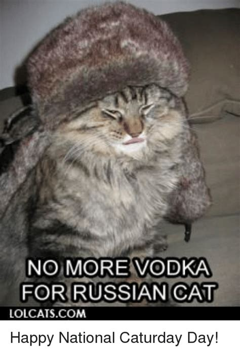 Russian Cat Meme - funny caturday memes of 2017 on sizzle playtime