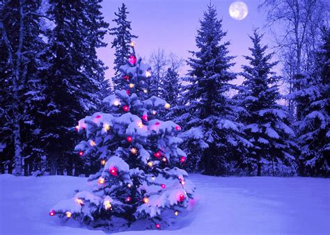 imagenes animadas de navidad para fondo de escritorio fondo escritorio navidad arbol