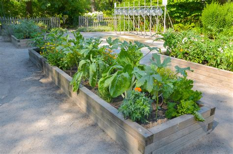 Raised Bed Gardening Tips by Raised Beds Garden Uk Images