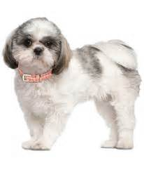 clippers for shih tzu blade chart shear ease ltd