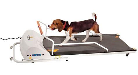 puppy treadmill 8 best reviewed treadmills on the market today jerusalem post