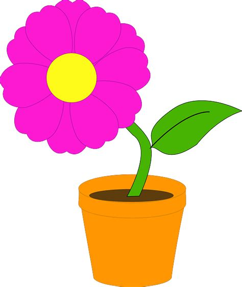 Bunga Poppy Pink Blossom free vector graphic plant potted flower pink free