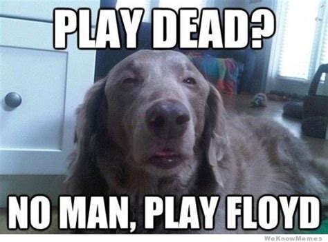 Stoner Dog Meme - post your funny animal pics and memes page 4