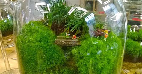 giardini in vaso ultimissime dall orto terrarium giardini in vaso