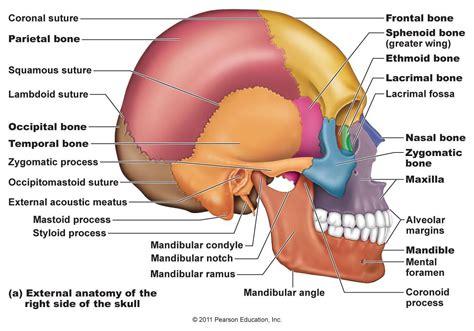 skull bone diagram structure of fetal skull diagram anatomy list