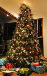 pinos y 225 rboles naturales de navidad en bogot 225 colombia