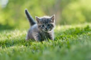 names for gray kittens slideshow