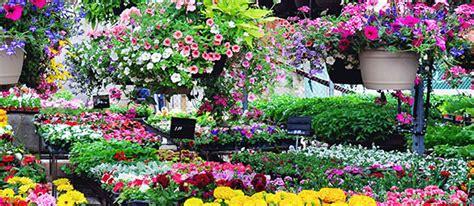 greenhouse plants evergreen  johnson city tn