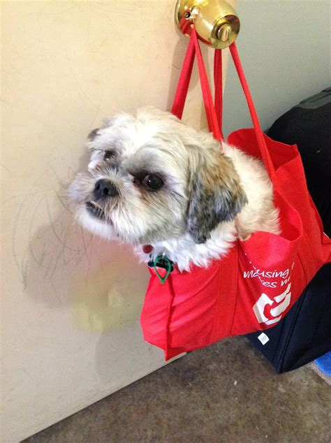 puppy bag toto in a bag dogs photo 31500894 fanpop
