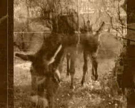 ufficio di collocamento lamezia terme viva l italia micu u pulici doovi