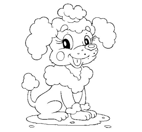 poodle puppy coloring page poodle coloring page