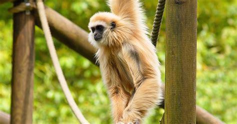 imagenes de animales endemicos m 233 xico apuesta por los zool 243 gicos sustentables para
