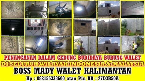 Buku 88 Strategi Budidaya Walet budidaya burung walet rumah burung walet sarang burung walet by mady walet kalimantan