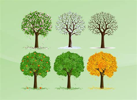 illustration of season trees seasons vector trees