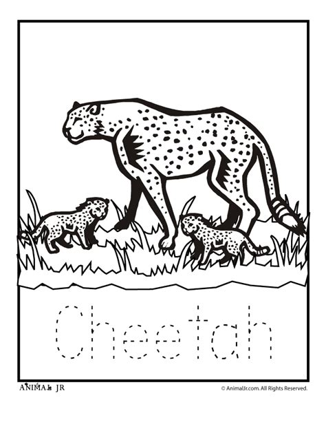 coloring book pages cheetah baby cheetah pictures coloring home