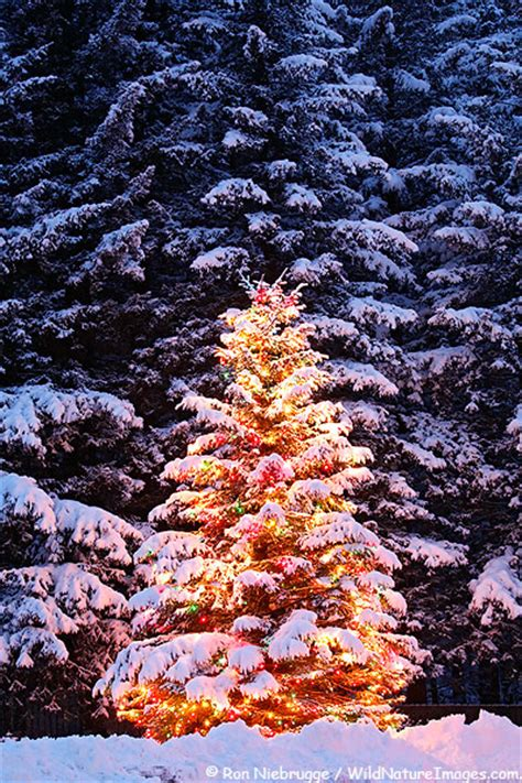 christmas tree photos christmas tree photos