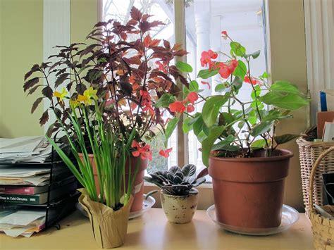 Windowsill Plants Garden Bloom Day January 2013