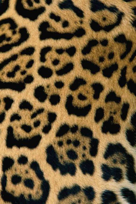 pattern photoshop leopard 665 best pattern animal planet images on pinterest