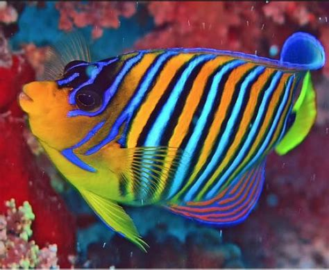 what color are fish 65 best images about beautiful fish on