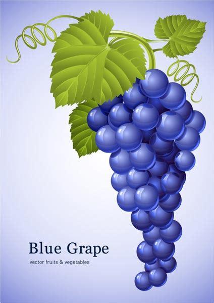 grapes vectors   colors  shapes