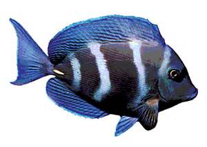 do fish see color oceans for youth educational website for of all ages