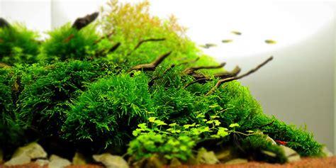 aquarium plant basics   information  subject