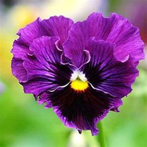 purple color combination popular purple color combinations buy cheap purple color
