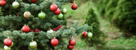 images of christmas tree farm happy valley christmas
