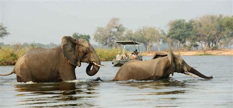 boat cruise zambia zambia lower zambezi boat cruise elephants in river