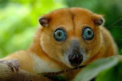imagenes originales de animales fotos deanimales imagui