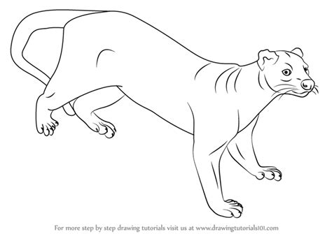 doodle drawings how to learn how to draw a fossa animals step by step
