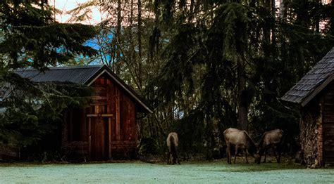 Cabins At Mt Rainier by Mt Rainier National Park Lodging Rainier Cabin At Mt Rainier Ashford Wa Usa