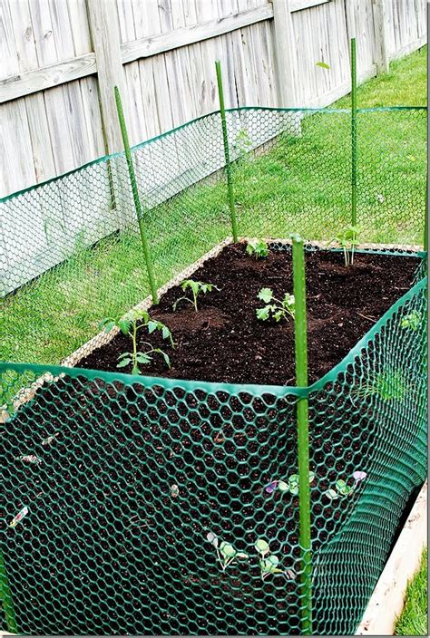 Cheap Raised Planters by Best 25 Deer Netting Ideas On