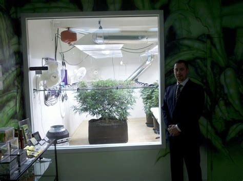 could legalized pot hurt washington s marijuana