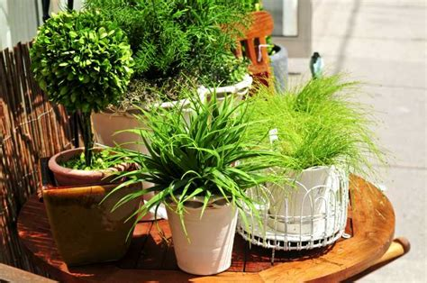 house plant ideas detoxifying houseplants not only look nice green living