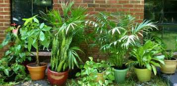guide to poisonous and nontoxic houseplants today s