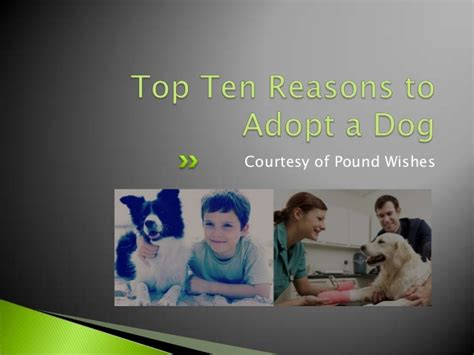 Top 10 Reasons To Adopt A by Top Ten Reasons To Adopt A