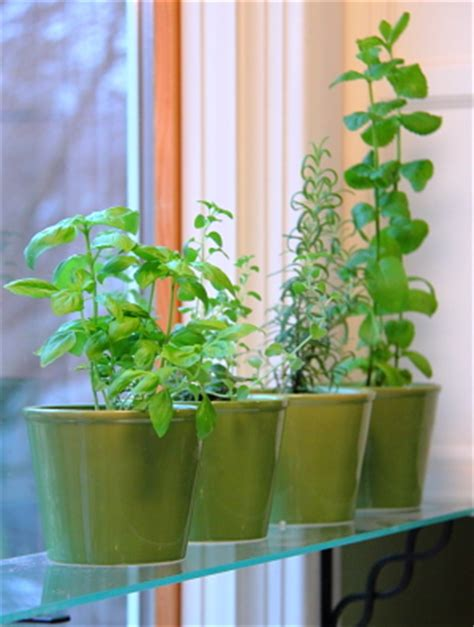 kitchen window herb garden kitchen window herb garden i am missing my fresh herbs