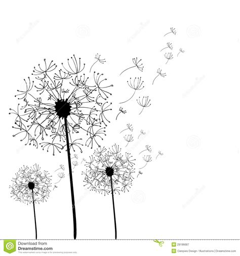 hand drawn dandelion isolated stock vector image 29196687
