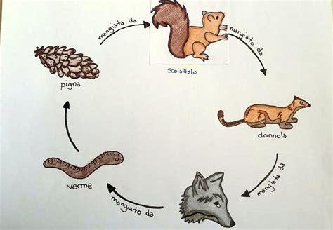 disegno catena alimentare reti alimentari nel bosco