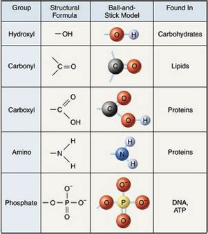 7 types of carbohydrates carbon carbohydrates lipids proteins