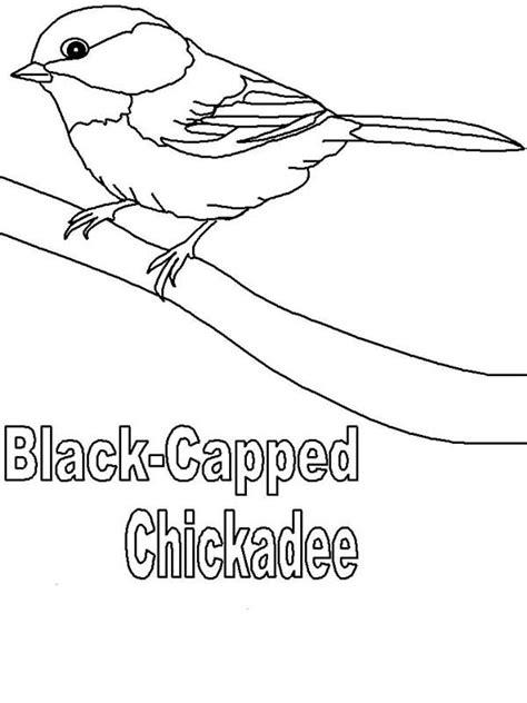 chickadee bird coloring page chickadee bird coloring pages clipart best chickadee