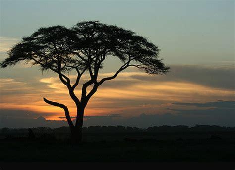 best safari tour operators best tanzania safari companies reviews ratings how to