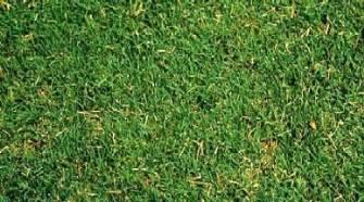 bermuda grass seed and varieties